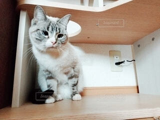 キャットタワーの下に隠れる猫の写真・画像素材[4124679]