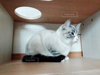 隠れる猫の写真・画像素材[4124680]