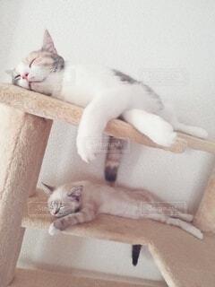 かわいい2匹の寝顔の写真・画像素材[4134383]