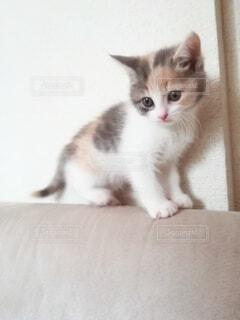 かわいい子猫の写真・画像素材[4134385]