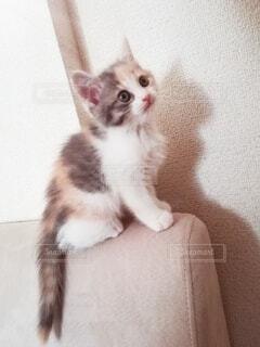 ちょこんと座る子猫の写真・画像素材[4134384]