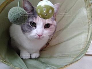 トンネルの中の猫の写真・画像素材[4147748]