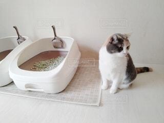 トイレの横に座る猫の写真・画像素材[4147751]