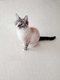 何かを見つめる猫の写真・画像素材[4147769]