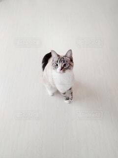 何かを狙う猫の写真・画像素材[4147771]