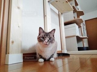 座っている猫の写真・画像素材[4645270]