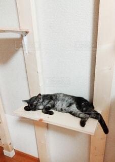 キャットタワーで寝ている猫の写真・画像素材[4770285]