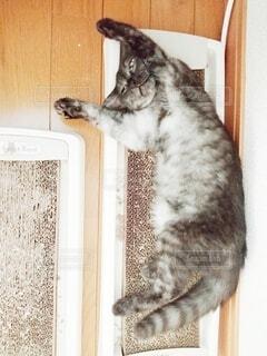 爪研ぎの上で寝る猫の写真・画像素材[4770275]