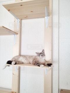 キャットタワーで寛ぐ猫の写真・画像素材[4840065]