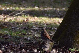 お散歩中の小鳥の写真・画像素材[2939110]