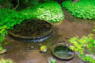 富士山の湧き水の写真・画像素材[3765373]