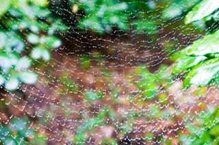 雨上がりの蜘蛛の巣の写真・画像素材[3795007]