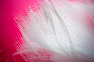白い羽根のクローズアップの写真・画像素材[3811987]