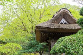 藁葺き屋根の写真・画像素材[3838976]