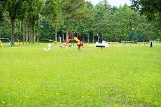 児童公園と西洋タンポポの写真・画像素材[4211092]
