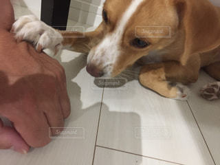 愛犬の写真・画像素材[3022719]