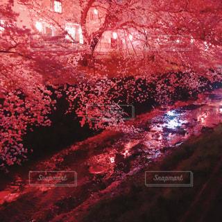 空の花火の群の写真・画像素材[3054212]