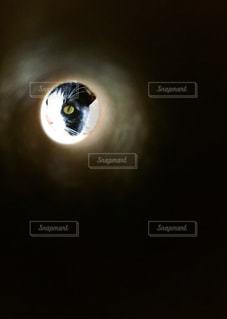 覗き猫の写真・画像素材[2923744]