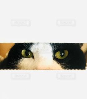 ネコの目の写真・画像素材[2926045]