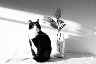 花とネコの写真・画像素材[2944503]