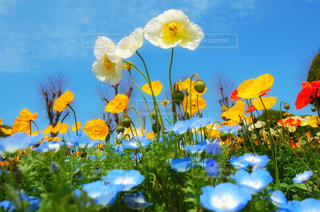 お花畑の写真・画像素材[2965811]