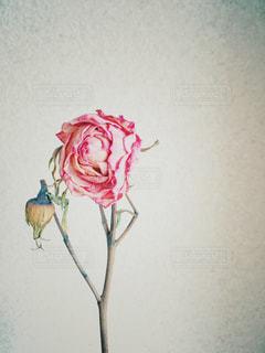 ドライフラワーの写真・画像素材[3090001]