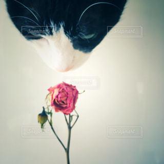 花と猫の写真・画像素材[3090012]