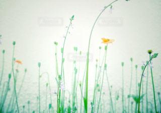 花の写真・画像素材[3115495]