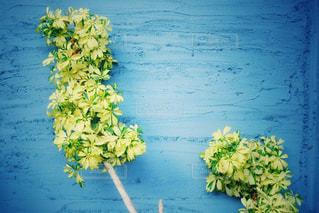 青い壁と植物の写真・画像素材[3131471]