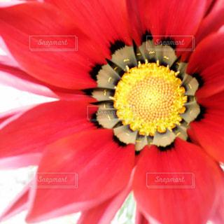 美しい花の写真・画像素材[3161113]