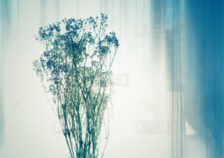 かすみ草の写真・画像素材[3208171]