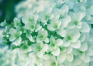 花びらの写真・画像素材[3293684]