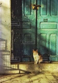 チュニジアで出会ったネコの写真・画像素材[3388781]