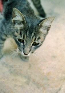 トルコで出会ったネコの写真・画像素材[3397967]