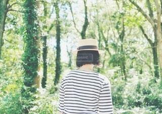 森の中の写真・画像素材[3564424]