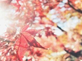 優しい光の写真・画像素材[3628611]