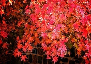 美しい紅葉の写真・画像素材[3628626]
