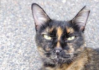 地域猫の写真・画像素材[3700480]
