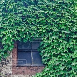 蔦の葉に覆われた家の写真・画像素材[3843772]