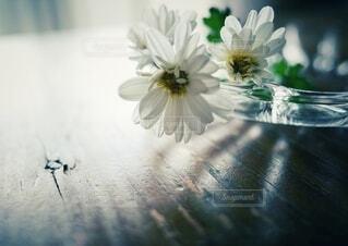 花のある暮らしの写真・画像素材[3872511]