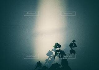 光のあたる場所の写真・画像素材[3955187]