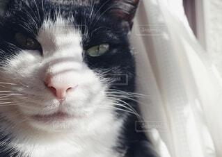 猫の顔の写真・画像素材[4184757]