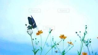 蝶々とお花の写真・画像素材[2925635]