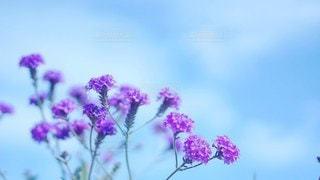 小花と空の写真・画像素材[2925636]