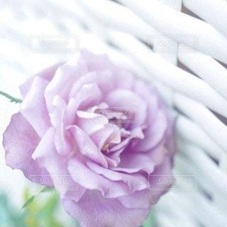 花のクローズアップの写真・画像素材[2925760]