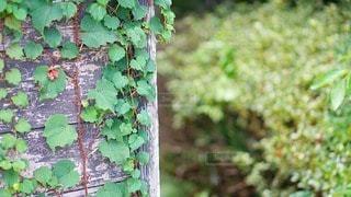 森の中の緑の植物の写真・画像素材[2926154]