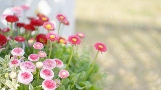 丸っこい花の写真・画像素材[2926613]