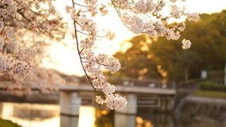 木の上の花瓶の写真・画像素材[2927060]