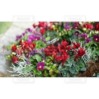 花のクローズアップの写真・画像素材[2927124]