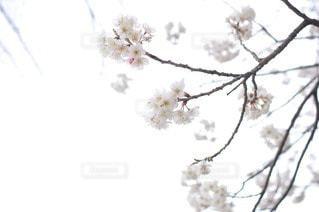 自然 - No.118752